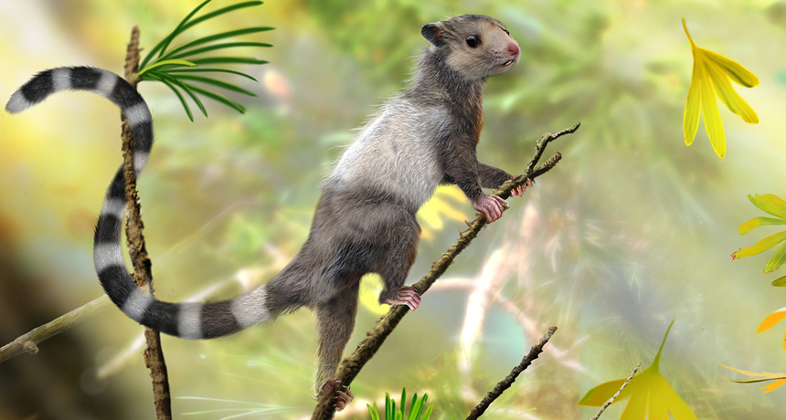 Three new Jurassic euharamiyidan species reinforce early divergence of mammals : Nature : Nature Publishing Group