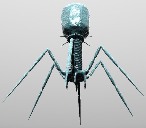 http://historyoftheuniverse.com/images/bacteriophage500.jpg